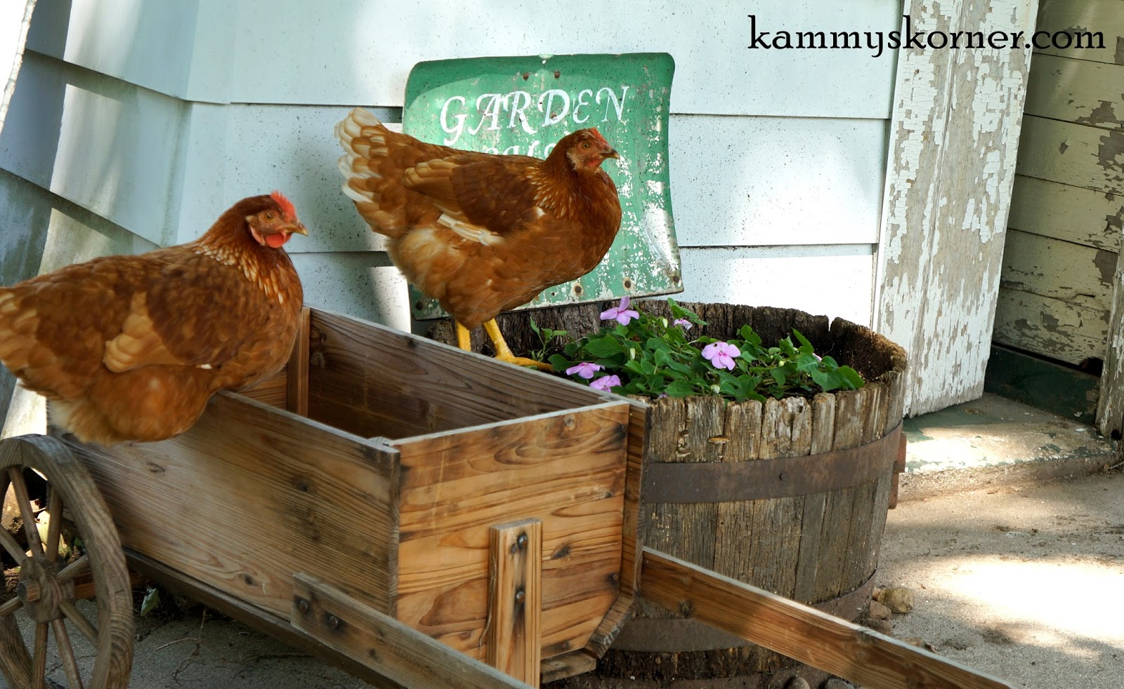 Kammy\'s Korner: Landscaping Around my Garden Shed