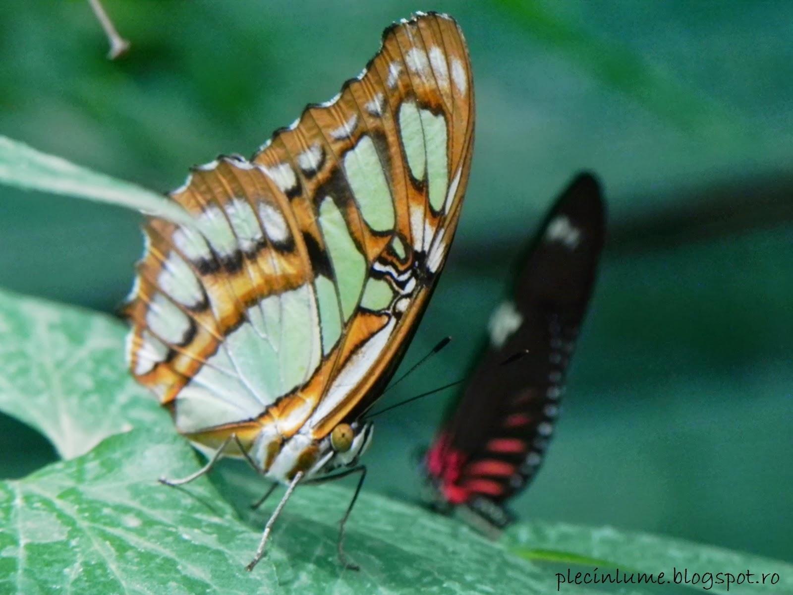 Fluture in prim plan