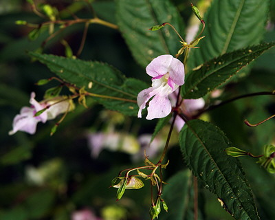 Image of flowers in Léaz forest