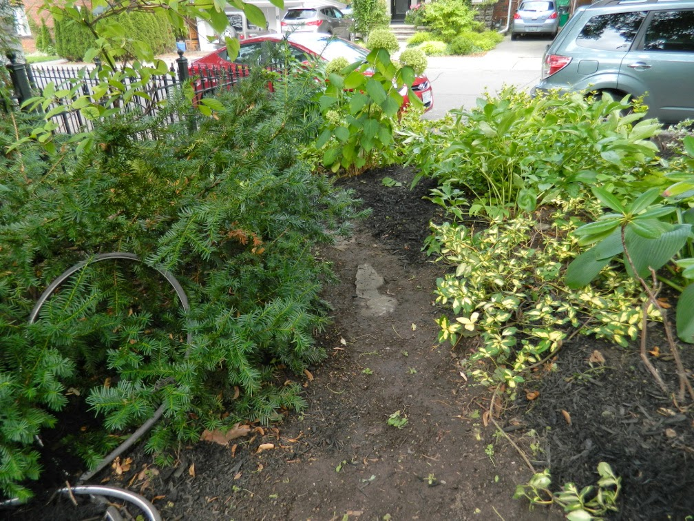 Toronto garden clean up Davisville after Paul Jung Gardening Services