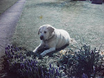 A dog called Buxton ( RIP )