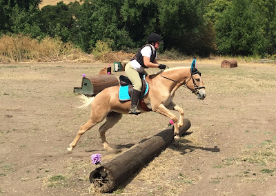 palomino mule cross country jumping