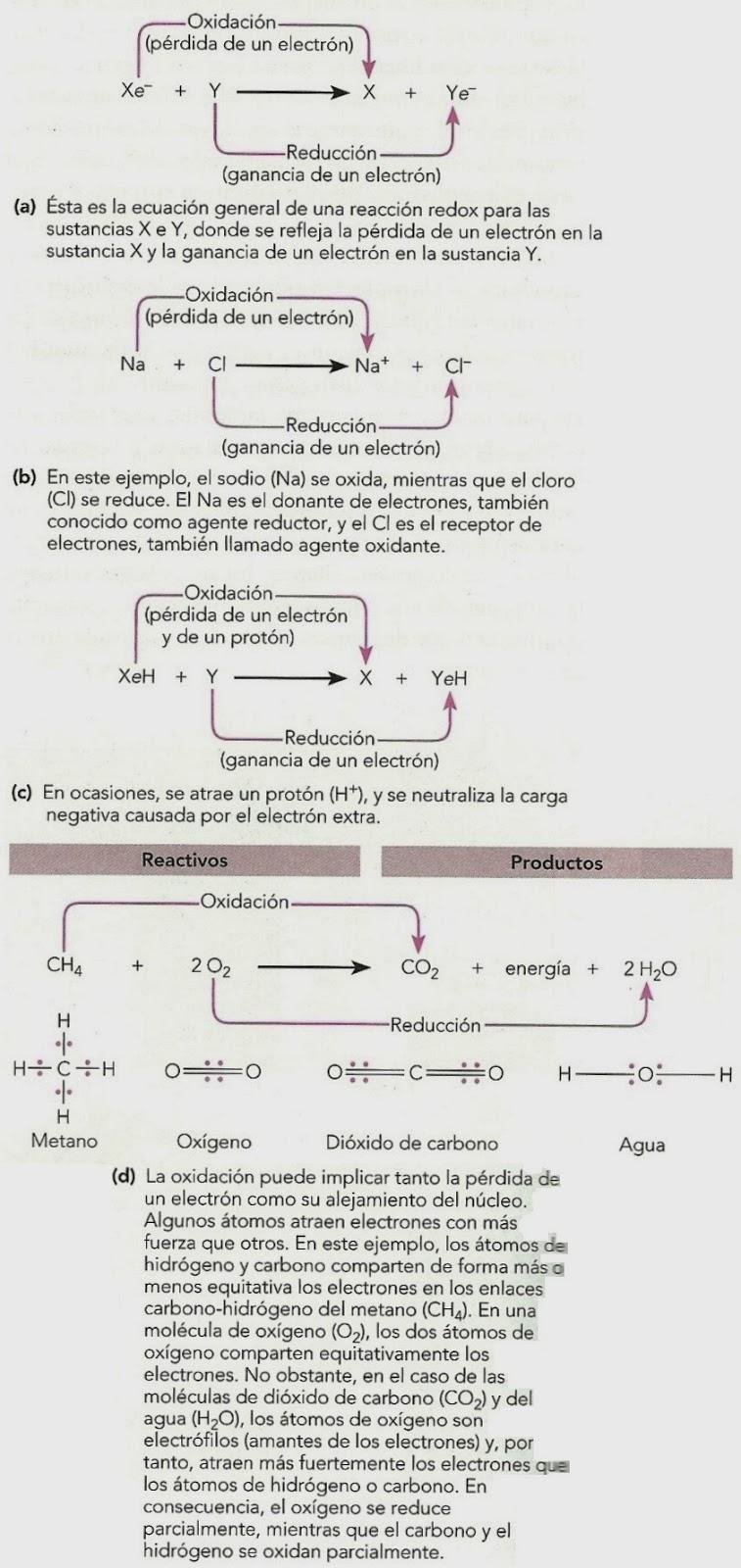 Bioquímica vegetal básica (7). Energía y reacciones químicas ...
