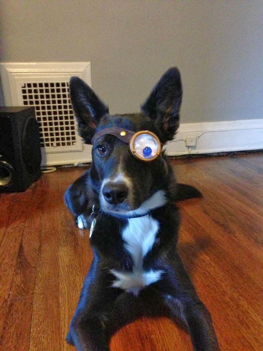 Cute dogs - part 11 (50 pics), dog wearing monocle