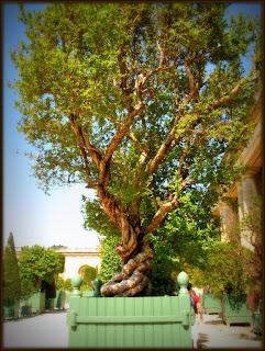 Orangerie et bosquets  - De la Zep aux Étoiles