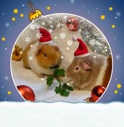 Weihnachtskarten online bestellen - Weihnachtskarten online drucken ...