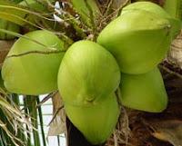 Resep Tradisional Mengatasi Penyakit Dilep