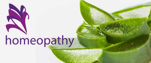 "The underlying idea of Homeopathy has been known for at least 2500 years. Around that time, its principles were mentioned by the Greek physician Hippocrates, the ""Father of Medicine.""  However, Homeopathy has only been in use as a practical method of healing for about the last 200 years. The German Physician and Chemist, Samuel Hahnemann (1755 - 1843), discovered the principles and laws of Homeopathy. He clarified, formulated and developed them into a practice of Homeopathy same to the one we have today. He is rightly regarded as the founder of Homeopathy.  Hahnemann set down the basic philosophy for Homeopathy in a book called The Organon of Medicine. It was first published in 1810, and Hahnemann revised it through six editions before his death. The Organon is still the Bible of homeopaths. During his long life, Hahnemann introduced about 100 remedies, most of which are the core medicines still used today.  Since Hahnemann's time, Homeopathy has certainly developed, and it has also waxed and waned in popularity. But the whole philosophy and practice of Homeopathy springs entirely from the genius of his thoughts and experiments.  Hahnemann's Insight Hahnemann was originally trained as a doctor. But he soon became dissatisfied with the crude, unscientific, painful and downright dangerous medical practices of the time. Much of this centered around blood letting, sometimes in excessive and fatal quantities, and the use of large doses of poisonous drugs, such as mercury. It is no exaggeration to say that the disease was often preferable to the cure.  Eventually Hahnemann gave up medicine for a time. To support his large family, he earned a small income from writing and translations. He was an impressive linguist, fluent in at least five languages.  His Own ""Guinea Pig"" In 1791, Hahnemann was translating an English article on the use of Peruvian or cinchona bark, also known as quinine. Quinine is a drug that is used in the treatment of the infectious tropical disease, Malaria. Hahnemann became interested in this idea and started to experiment on himself. He consumed small pieces of the bark. Very quickly he developed a number of symptoms, including heart palpitations, drowsiness, alternating fever and chills, and drenching sweats. Each attack of symptoms lasted two or three hours and reappeared at regular intervals.  Hahnemann had produced in himself all the symptoms of malaria, but without actually experiencing the disease itself. As soon as he stopped taking the bark, the symptoms disappeared. He had discovered a remedy, which we now call China, and had developed the Law of Similars. From this, he reasoned that something in the bark could produce a symptom pattern that mimicked Malaria -- and the same mysterious something could treat the actual disease of Malaria.  Testing The Substances -- The ""Provings"" Hahnemann now set about testing all sorts of substances, which he thought might contain curative powers. He experimented on himself and on his friends and colleagues, methodically recording the results for over 100 substances, which were then used to make remedies. This process of testing a substance on a healthy person to bring out the symptoms is called ""proving.""  Since Hahnemann's original 100 provings, at least 2000 more have been scientifically carried out.  Summaries of the symptoms produced by these substances have been listed, collected, compiled and set out in books known as Materia Medica. There have been various versions of Materia Medica prepared by a number of authors through the years. A Materia Medica and a Repertory -- which is really a detailed index to the Materia Medica -- are the two essential books that a practising Homeopath always has by his or her side.  Preparation Of Medicines Although Hahnemann had discovered the basic law of Homeopathy, that ""Similia similibus curentur"" (like cures like), there was still a problem. Many of the substances he wanted to use as remedies were very poisonous. Even in minute doses, there could still be risks and dangers. To avoid this, Hahnemann started to dilute the substances many times. Being a well-trained scientist, and an expert in pharmacy, he took great care in keeping the remedies pure and uncontaminated, as he made them into greater and greater dilutions. In fact, he diluted the remedies so many times that it seemed they could not possibly work. The dilutions were so weak that virtually nothing of the original substance remained!  Between each dilution, Hahnemann devised a method of vigorous shaking of the solution. This had a powerful effect and ""energized"" the remedy, releasing huge reserves of curative energy from the original mother substance. The vigorous shaking process is known as succussion. The combination of alternate dilution and succussion at each stage of the remedy preparation is called potentization.  The Shorthand On The Pill Bottle Homeopathic remedies are usually available as pills in bottles. The bottle bears a label with the remedy name, a number and a letter, for example, Arnica 6C. The number refers to the number of successive dilutions that have been carried out. The letter refers to the proportion or quantity of the dilution. For example, C stands for 100, which means that for each stage of the dilution and succession process, one part of the previous dilution was added to 99 parts of water (or alcohol). Sometimes you see X, which means a dilution of one in 10, or M, which is 1,000C.  The combination of number and letter indicates the potency -- the ""power"" of the preparation.  For Arnica 6C, one part of the original Arnica plant was first diluted in 100 parts of alcohol, and succussed. This process was repeated five more times. In the final dilution, there is only one part in 1,000,000,000,000 (one million million) of the original Arnica.  History Although the origin of Homeopathy can be traced back to the time of Hippocrates, it was first organized by Dr. Samuel Hahnemann. Hahnemann believed that the medical practices of his day, which included severe bloodletting, were barbaric, outmoded, and made for poor patient compliance. He coined the term allopathy for this practice of medicine from the Greek word ""allo"" meaning ""other than"" and ""pathy"" meaning ""disease"". He described these medical practices as the suppression of symptoms.  For more than 10 years, Hahnemann researched the profiles of a large number of plants. He recorded the findings and named this process a proving, a test of the effects of a substance on a healthy person. Hahnemann wrote the first Homeopathic Material Medica (a book that lists substances and the symptoms produced by their ingestion) and published it in 1810.  When someone became ill, Hahnemann conducted physical exams and questioned the person thoroughly about their general health, outlook on life, and symptoms they were experiencing. Hahnemann then attempted to match the patient's symptoms to the ""provings"" and administer a dilution of the matched compound. And he found curing diseases with medicines which are capable of producing similar symptoms.  The curative agent is given in an appropriate dilution to effect the safest cure without aggravating or intensifying the pre-existing symptoms. Hahnemann knew that giving even small doses of toxic material could have negative effects, so he developed a unique system of dilution. By this method, he found that he could take advantage of the curative properties of an agent without causing any side effects.  Homeopathy Medicines Nature is the fountain of Homeopathic medicines. The Homeopathic medicines are prepared from a wide range of natura l sources. Over 75% of the medicines origin from the vegetable kingdom, i.e. flowers, roots, leaves and the juice.  Certain chemicals and minerals are also used to prepare some medicines. For instance, sulphuric acid, nitric acid etc. Most of the minerals and metals are used as a source of medicine, such as gold, silver, zinc, tin, iron etc.  Some microbes, bacteria and virus are also used to prepare a special group of medicines (called Nosodes). For instance, influenza virus, bacteria which produce tuberculosis, Somebody secretion such as the hormones ( thyroid hormone, for instance) also find place in the wide source.  Animal kingdom has a special place in the Homeopathic pharmacy. Homeopathic medicines are prepared from the animal sources. Some insects such as Spanish fly (Apis Mellifica) and certain animal products like the venom of Cobra (Naja) are used in unique manner.  As you can realize, there is infinitesimal original drug substance in the higher potency medicines. Actually it crosses the Avogadro's limit. There is no detectable material in the potency higher than 24. What is left behind is the power or energy of the medicine. One may call it dynamic power, which is capable to induce definite changes in the body system to bring about the healing process.  It has been the day to day experience of thousands of Homeopaths world-over, for last 200 years that Homeopathy medicine, even in the smallest form, works!     Whom to contact for Best Homeopathy Treatment  Dr.Senthil Kumar Treats many cases with Homeopathy medicines, In his medical professional experience with successful results. Many patients get relief after taking treatment from Dr.Senthil Kumar.  Dr.Senthil Kumar visits Chennai at Vivekanantha Homeopathy Clinic, Velachery, Chennai 42. To get appointment please call 9786901830, +91 94430 54168 or mail to consult.ur.dr@gmail.com,    For more details & Consultation Feel free to contact us. Vivekanantha Clinic Consultation Champers at Chennai:- 9786901830  Panruti:- 9443054168  Pondicherry:- 9865212055 (Camp) Mail : consult.ur.dr@gmail.com, homoeokumar@gmail.com   For appointment please Call us or Mail Us  For appointment: SMS your Name -Age – Mobile Number - Problem in Single word - date and day - Place of appointment (Eg: Rajini - 99xxxxxxx0 – Psoriasis – 21st Oct, Sunday - Chennai ), You will receive Appointment details through SMS"