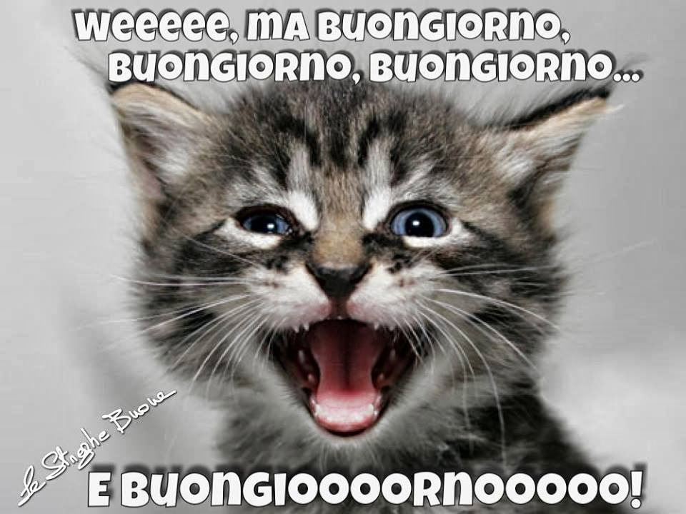 Le streghe buone the original pagina facebook i link for Buongiorno con gattini