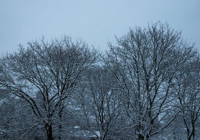 Träd täckta av snö.