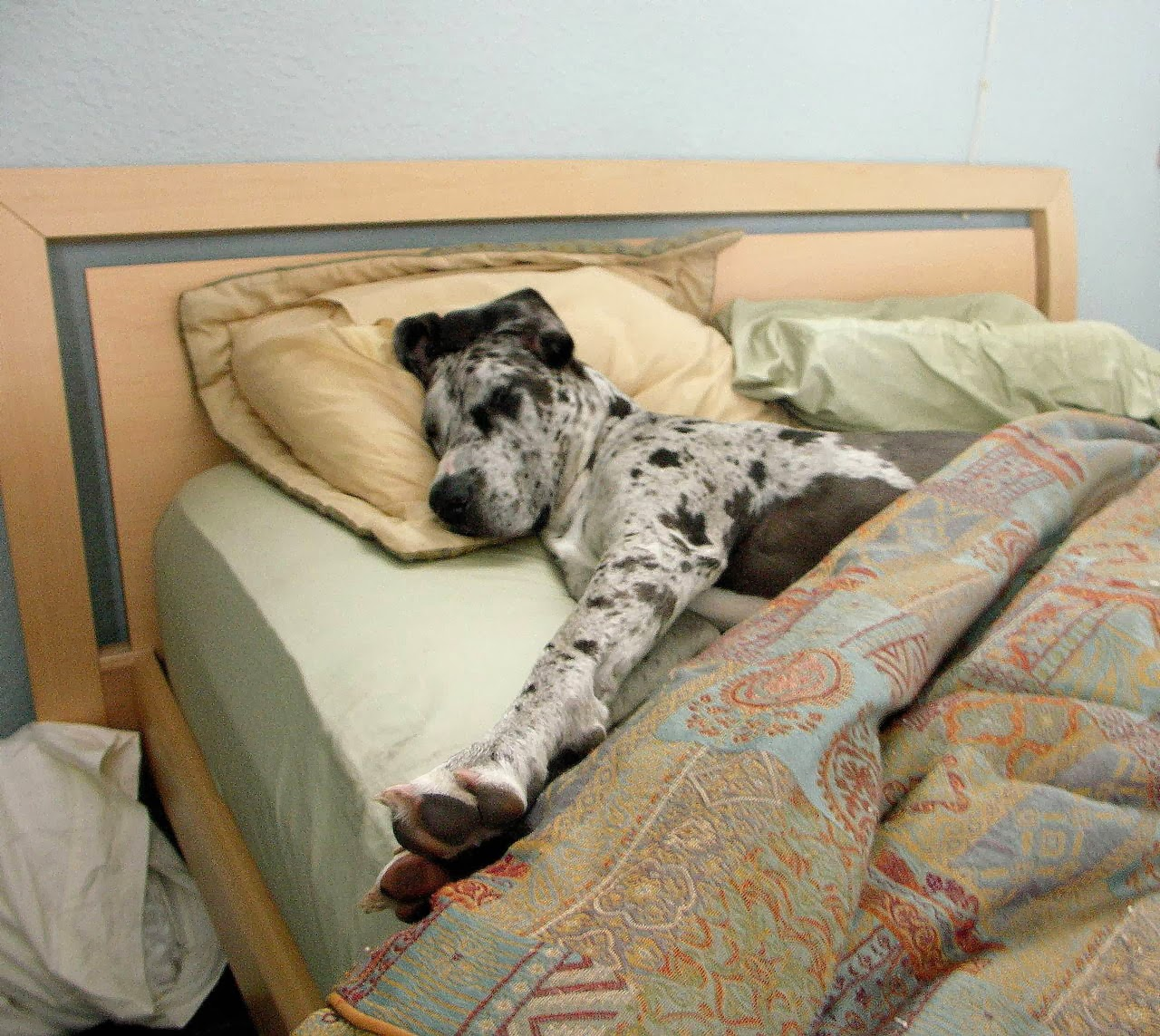 Cute dogs - part 11 (50 pics), dog sleeps in bed