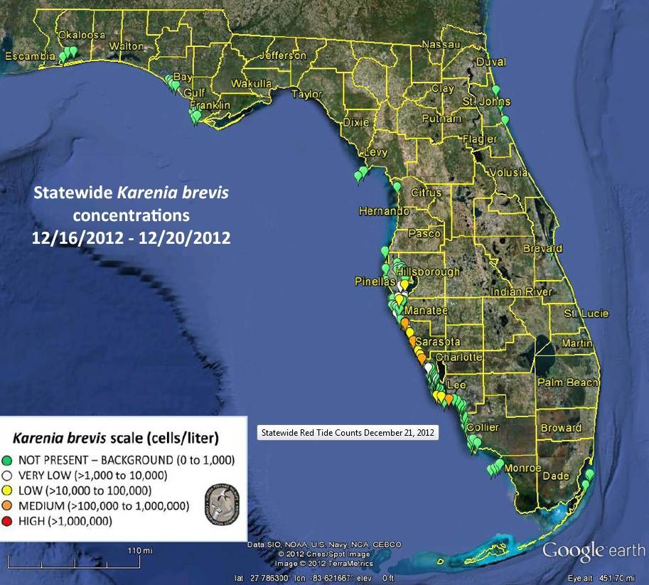 Sarasota fish related keywords suggestions sarasota for Tides 4 fishing sarasota