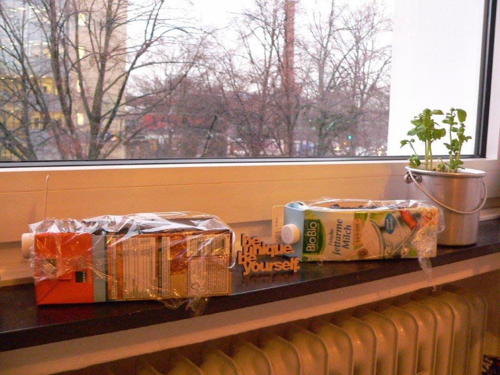 Balkongemüse Tomaten Mini Johannesbeertomate Upcycling Tetrapak Gefäß vorziehen Fensterbank