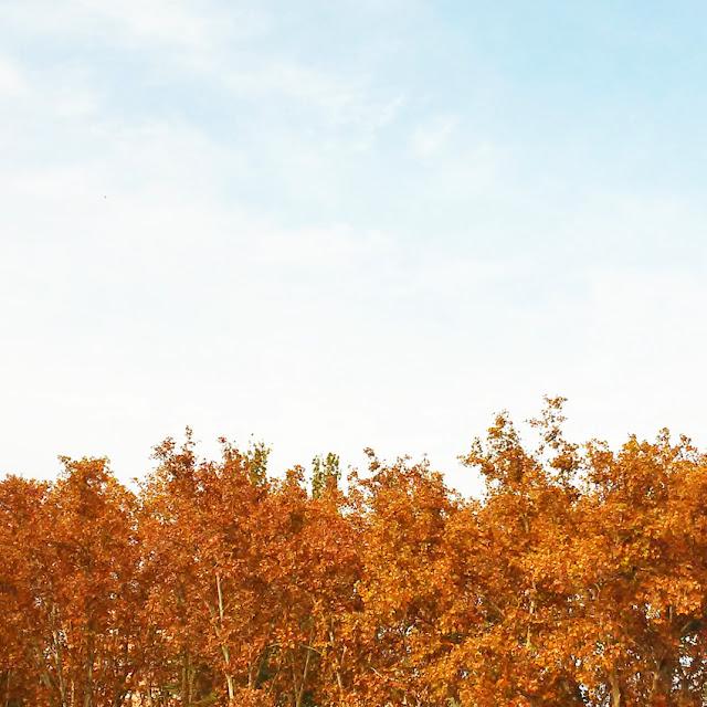 Árboles con hojas secas en otoño