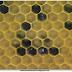 Francia.- Abejas producen miel azul y verde.