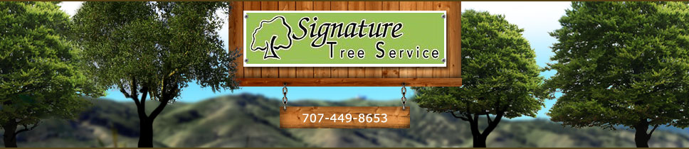 Signature Tree Service