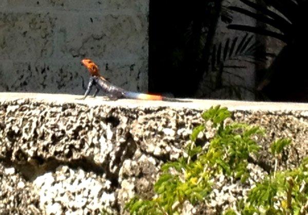 Piscina Veneciana de Coral Gables