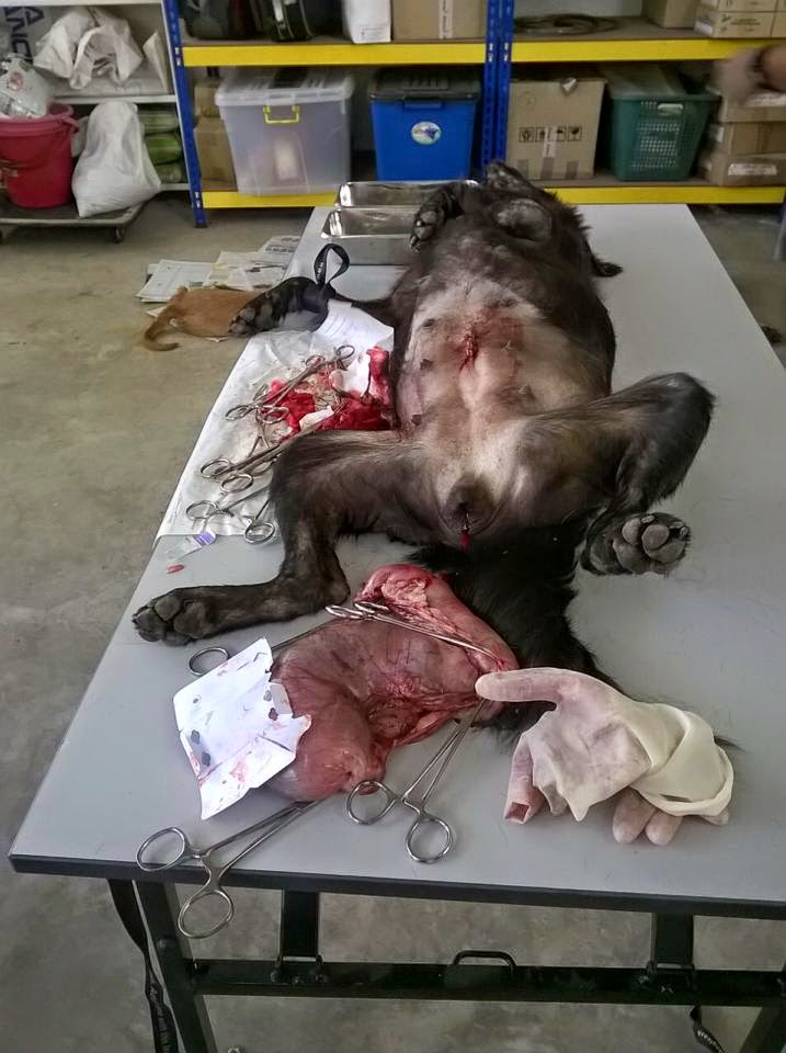 Spaying A Dog Video