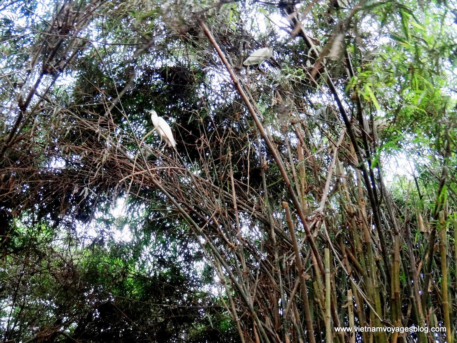 Tham quan Vườn cò Bằng Lăng ở Cần Thơ