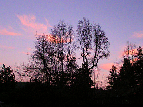 Dark trees with clear purple skies and a few red clouds.