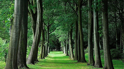 HD Nature Wallpaper green path
