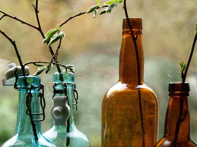 Drivna kvistar i flaskro. Foto: Anette Brunsell för blogg Rost och Rädisor