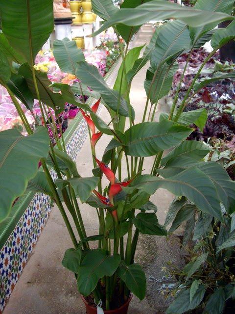 Via existencial como cuidar plantas tropicales de Plantas tropicales interior