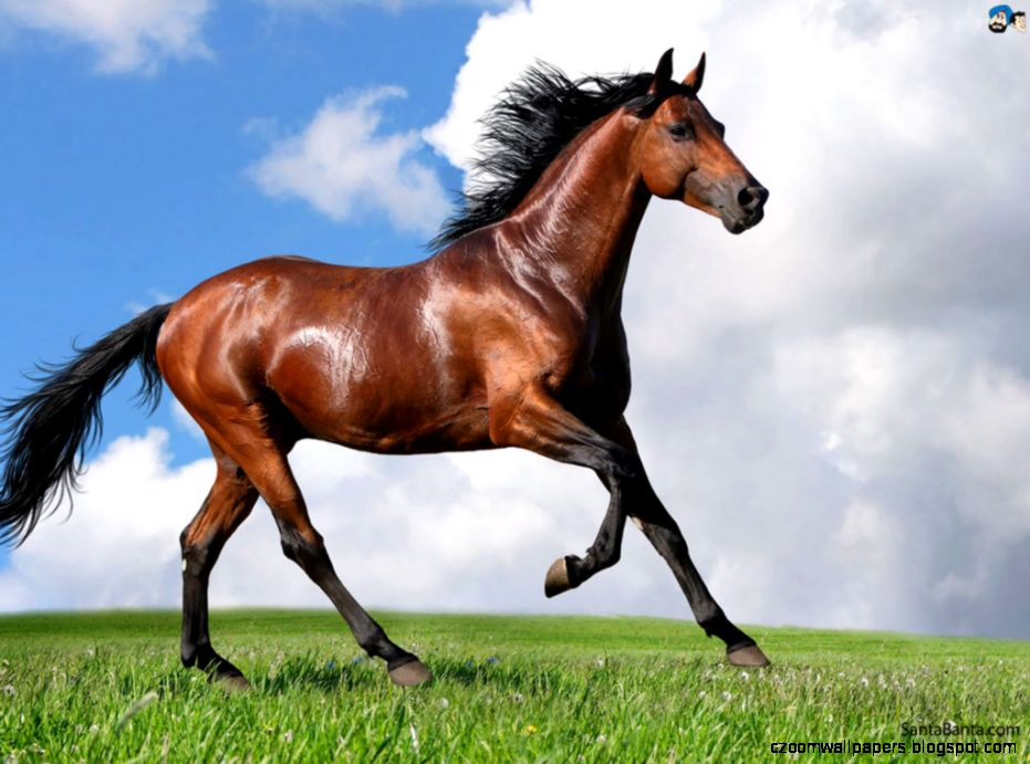 Interpretation of a dream in which you saw «Horse»