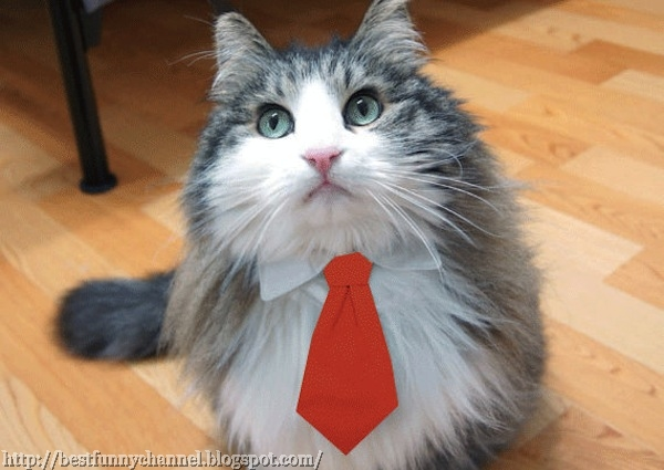 cat businessman..