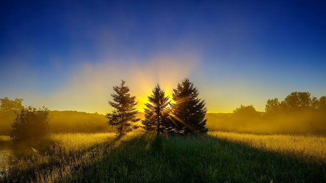 Early Morning Mist Nature Landscape Sunrise Trees HD Wallpaper