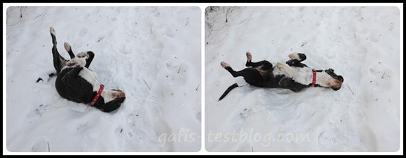 Boxer - Rückenmassage Im Schnee