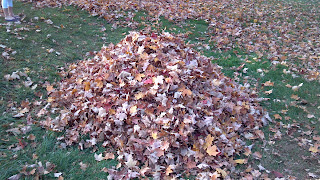 pile of leaves in some grass