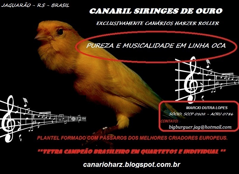 CANARIL SIRINGES DE OURO