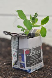 Making a Newspaper Seedling Pot
