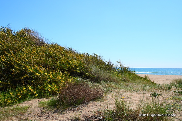Mediterranean dunes with acacia shrubs