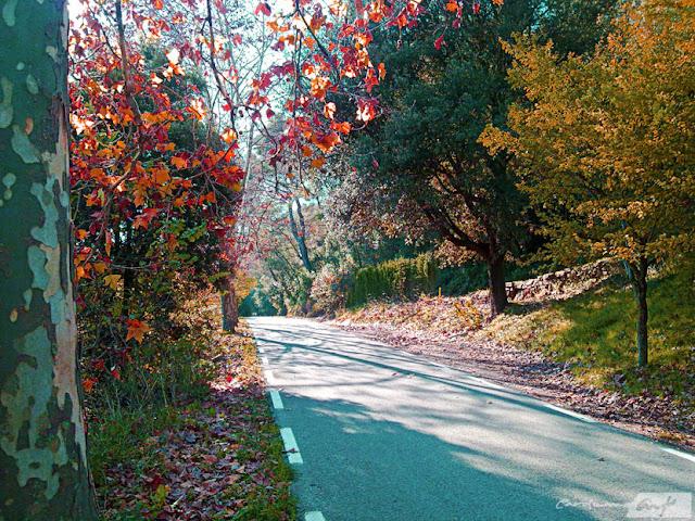 carretera hojas otoño arboles paseo