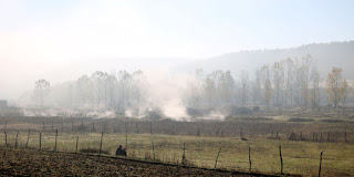 Piles of manure steaming on the fields