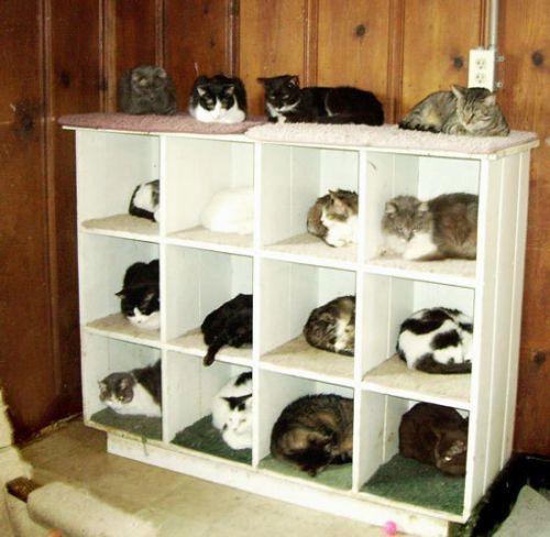 Un viejo gato azul El espacio en nuestro hogar y los gatos
