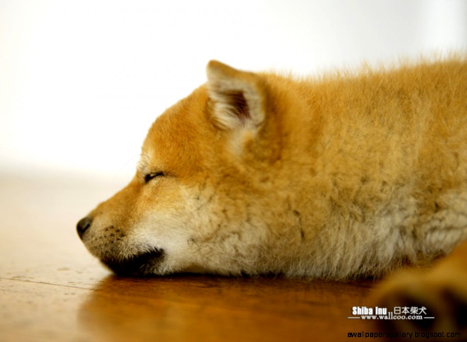 doge shibe wallpaper - photo #9