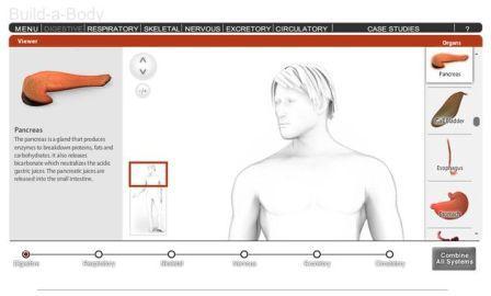 Estudiar el cuerpo humano en internet, Build a Body