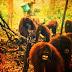 Η Ινδονησία καίγεται αλλά ποιός νοιάζεται