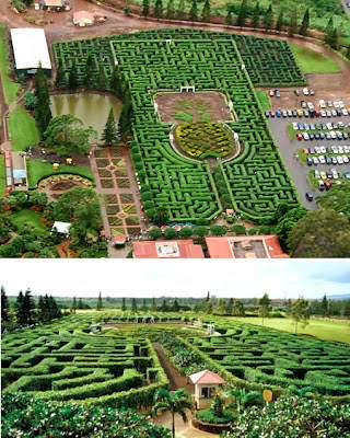 Pineapple Garden Maze (Hawaii)