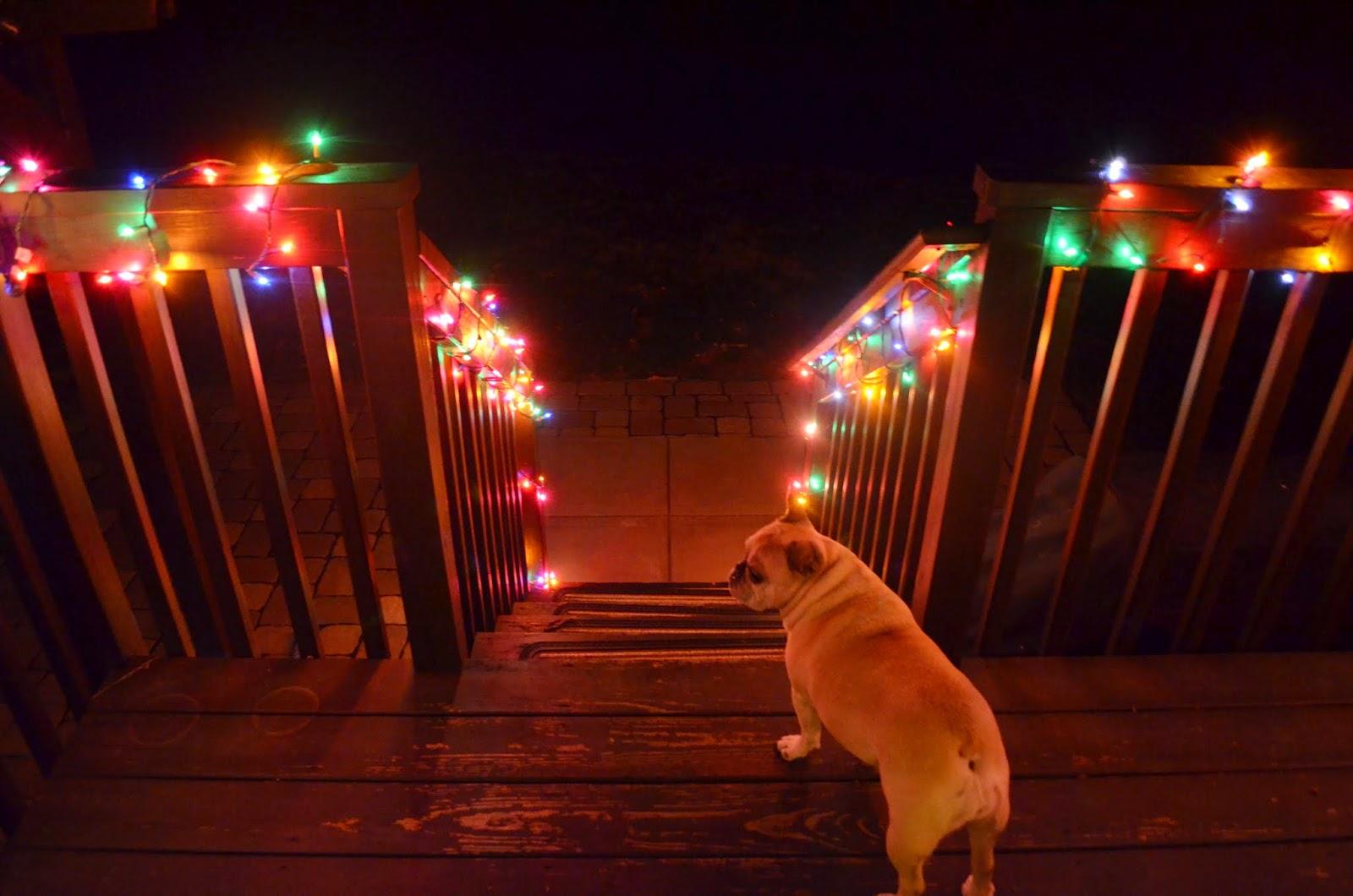 Christmas backyard lights in georgia