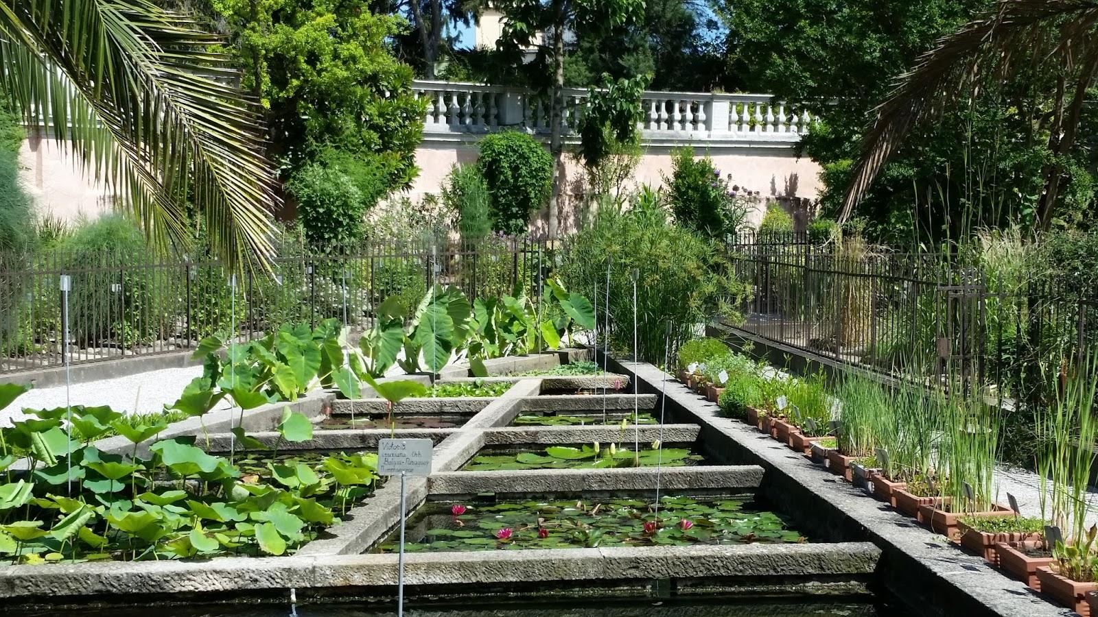 Hortibus fleurs de juin au jardin botanique de padoue for Jardin botanique decembre 2015
