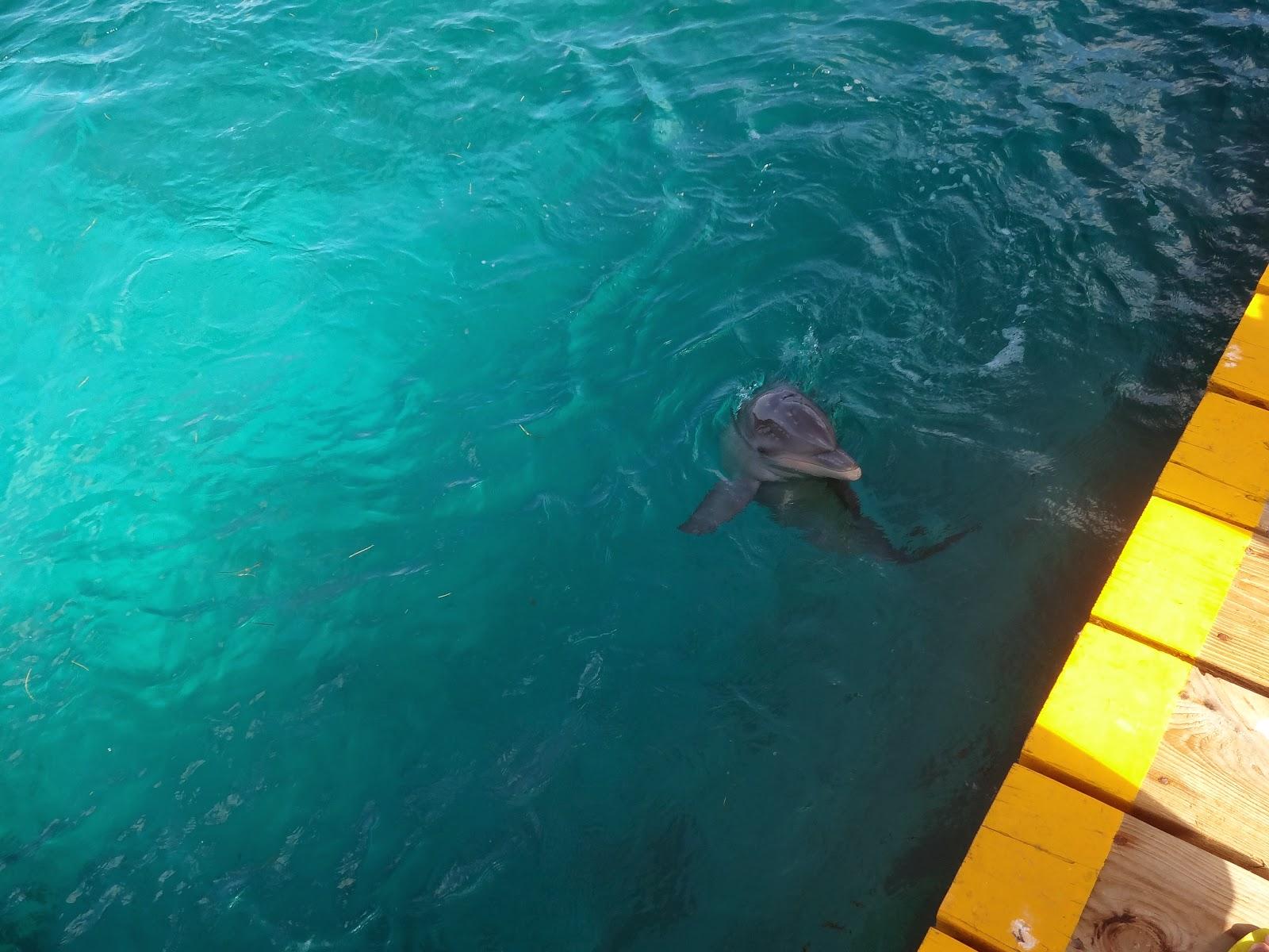 golfinho em isla mujeres cancun