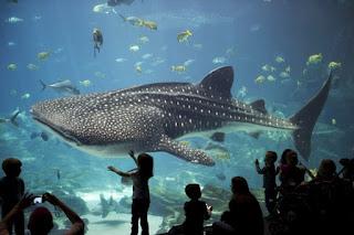 Aquarium de Géorgie