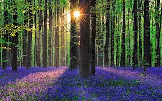 Μια μοναδική βόλτα στο εντυπωσιακό «Μπλε Δάσος»