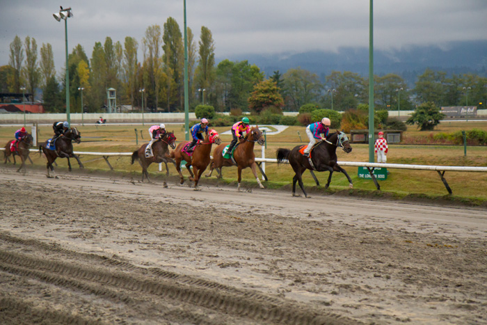 Horse race at Hastings Racetrack