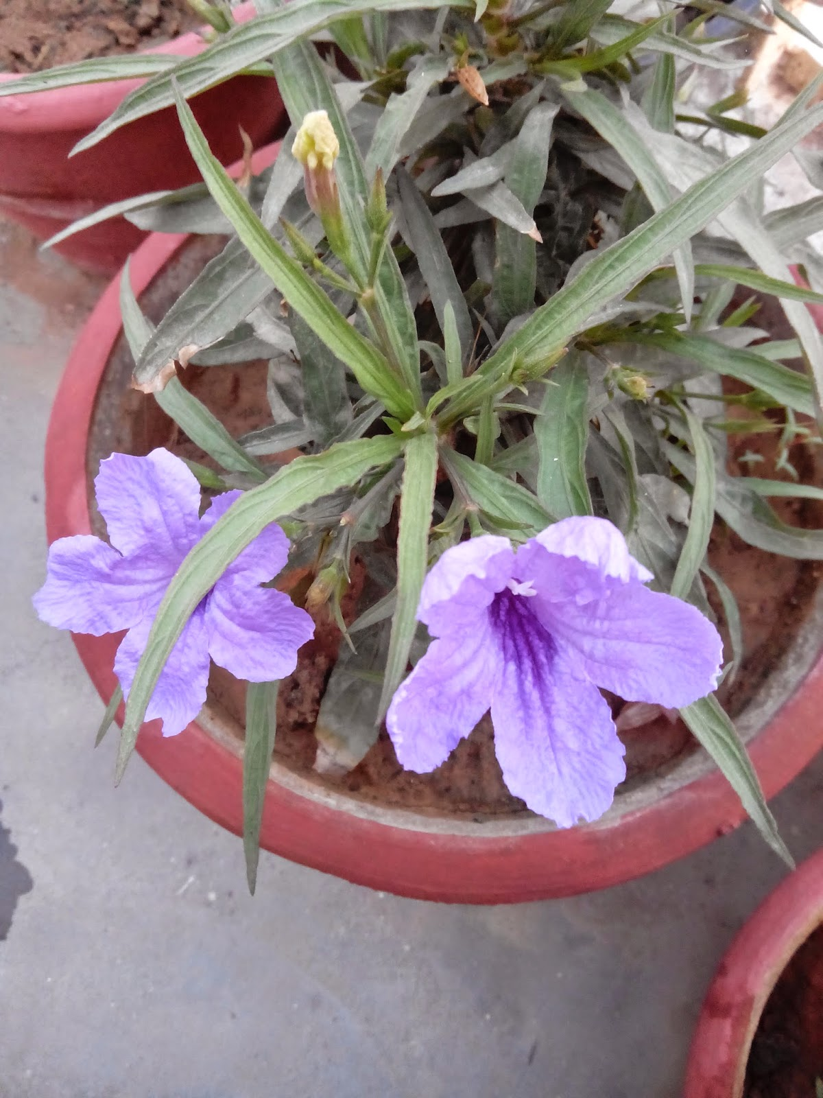 bageecha in hindi Buy outdoor & indoor plants online in india at best prices from mybageechawide range, fast delivery & prompt supportcod availablebuy plants online now.