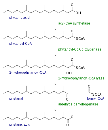 oksidasi alfa asam lemak